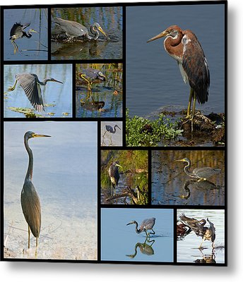 Tri-color Heron Collage Metal Print
