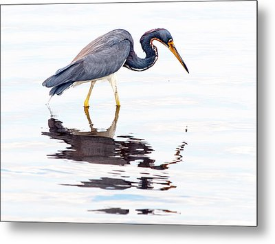 Metal Print featuring the photograph Tri-color Heron by Phil Stone
