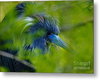 Metal Print featuring the photograph Tri-colored Heron Concealed    by John F Tsumas