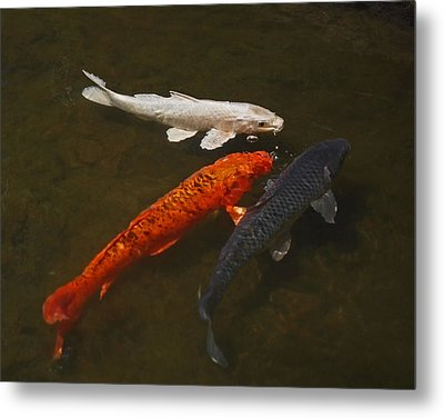 Tri-colored Koi Metal Print