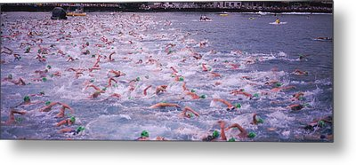 Triathlon Athletes Swimming In Water Metal Print by Panoramic Images