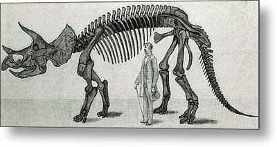 Triceratops Metal Print by English School
