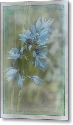 Metal Print featuring the photograph Tricia by Elaine Teague
