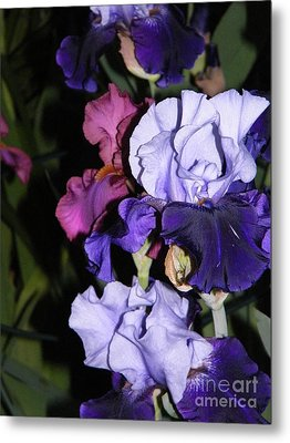 Tricolor Night Blossoms Metal Print