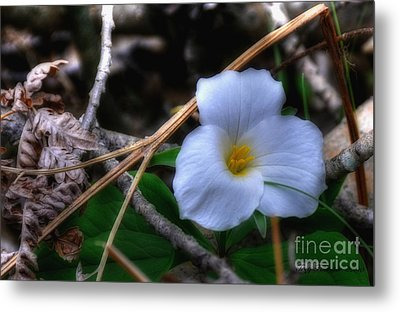 Metal Print featuring the photograph Trillium On County C by Trey Foerster