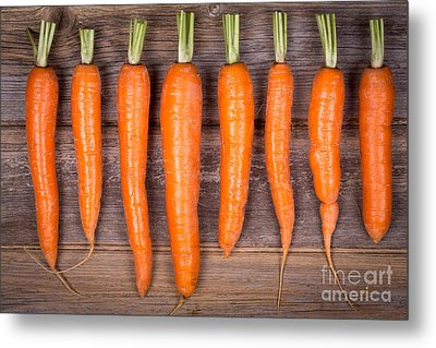 Trimmed Carrots In A Row Metal Print