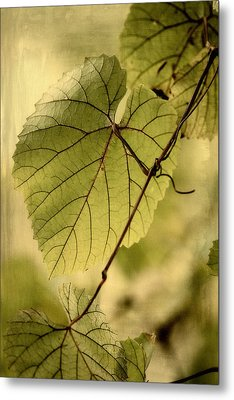 Trinity Grape Leaves Metal Print by Amy Neal