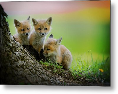 Trio Of Fox Kits Metal Print by Everet Regal