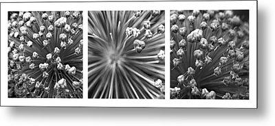 Triptych Allium Flower Metal Print by Alexander Senin