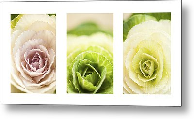 Triptych Of Ornamental Cabbages Metal Print