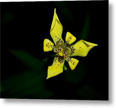 Tropic Yellow Metal Print by Miguel Winterpacht