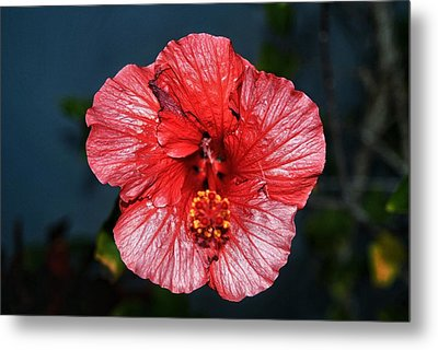 Tropical Burst Subdued Metal Print