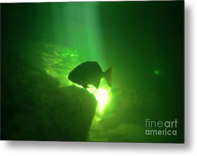 Tropical Fish Shilouette In A Cenote Metal Print by Halifax photography by John Malone