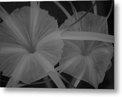 Tropical Garden Metal Print by Miguel Winterpacht
