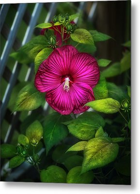 Tropical Hibiscus Metal Print