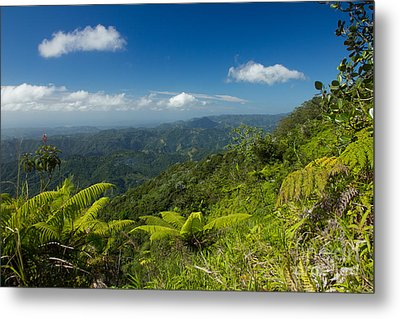 Metal Print featuring the photograph Tropical Highlands by Jose Oquendo