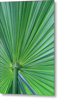 Tropical Leaf Metal Print by Carolyn Stagger Cokley
