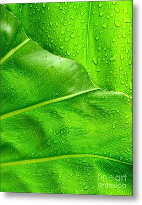 Tropical Leaves Metal Print by Ranjini Kandasamy