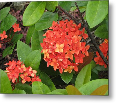 Metal Print featuring the photograph Tropical Orange Flower by Judy Palkimas