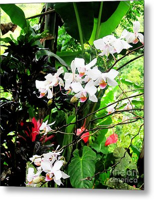 Tropical Orchids Metal Print by Tina M Wenger