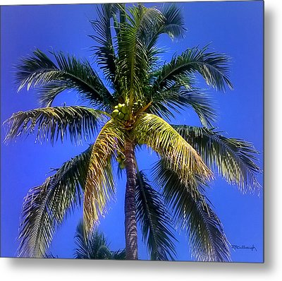 Tropical Palm Trees 8 Metal Print