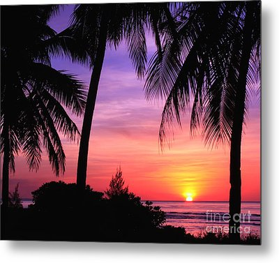 Tropical Paradise Metal Print by Scott Cameron