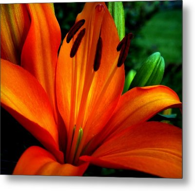 Tropical Passion Metal Print by Karen Wiles