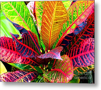 Tropicals Gone Wild Naturally Metal Print by David Lawson