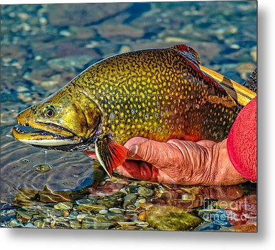 Trout Metal Print by Edward Fielding
