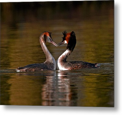 True Love Metal Print by Paul Scoullar
