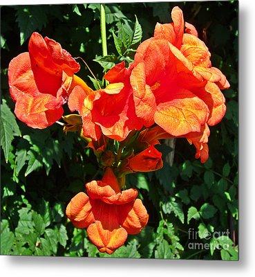 Trumpet Flower Orange Quartet Metal Print
