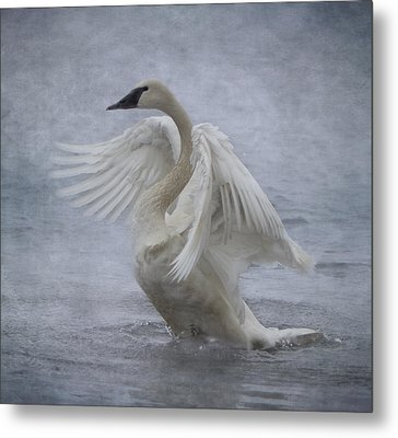Metal Print featuring the photograph Trumpeter Swan - Misty Display by Patti Deters
