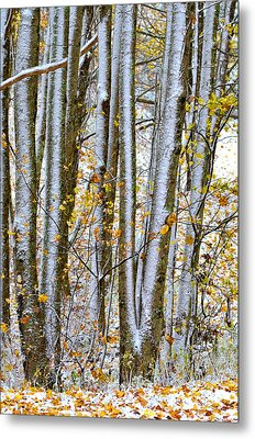 Trunks And Leaves Metal Print