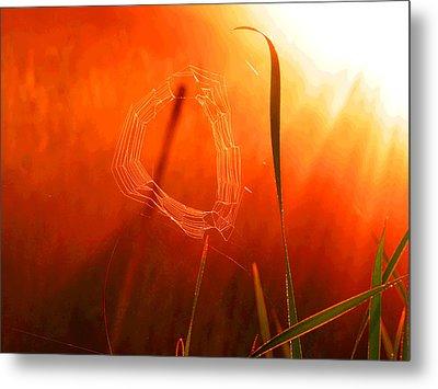 The Spider's Web In Golden Sunlight Metal Print