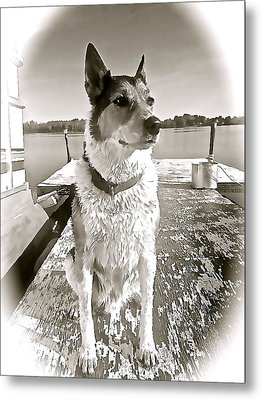 Tucker's Tuesday Metal Print by Danielle  Broussard