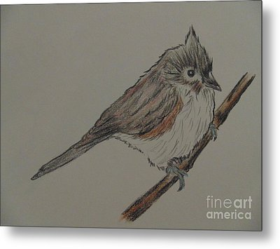 Tuffed Titmouse Metal Print by Ginny Youngblood