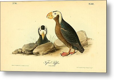 Tufted Puffins Metal Print by Philip Ralley