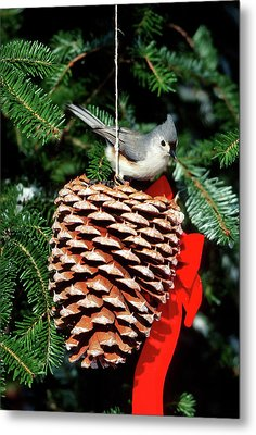 Tufted Titmouse (baeolophus Bicolor Metal Print by Richard and Susan Day