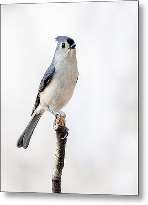 Metal Print featuring the photograph Tufted Titmouse by David Lester