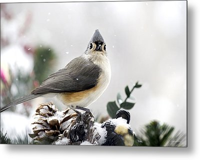 Tufted Titmouse In The Snow Metal Print by Christina Rollo