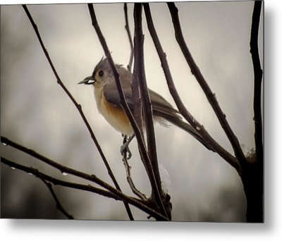 Tufted Titmouse Metal Print by Karen Wiles