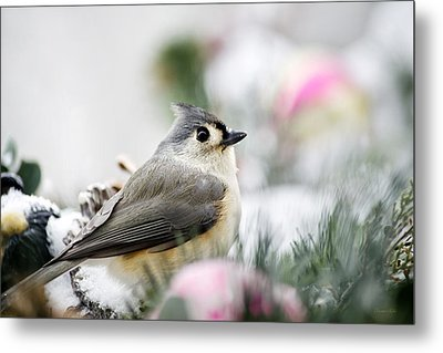 Tufted Titmouse Portrait Metal Print by Christina Rollo