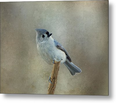 Tufted Titmouse Watching Metal Print