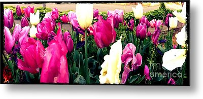 Metal Print featuring the photograph Tulip Delight by Leslie Hunziker