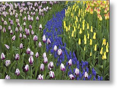 Tulip Design Metal Print
