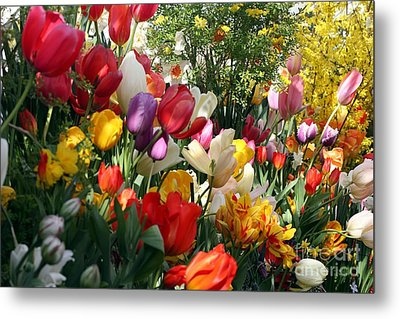 Metal Print featuring the photograph Tulip Festival by Mary Lou Chmura