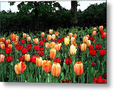 Tulip Festival  Metal Print by Zinvolle Art
