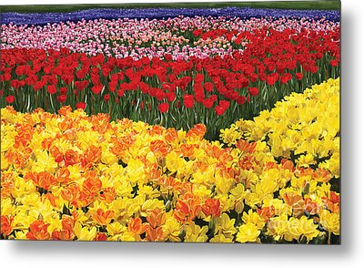 Metal Print featuring the digital art Tulip Field by Tim Gilliland
