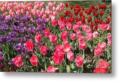 Tulip Garden 2 Metal Print