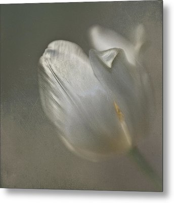 Metal Print featuring the photograph Tulip I by Kevin Bergen